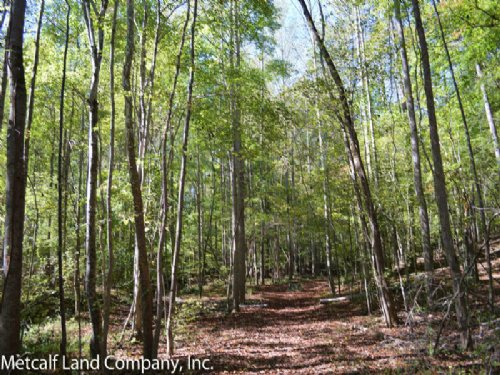 Great Rec. Tract With 2 Ponds : Cowpens : Spartanburg County : South Carolina