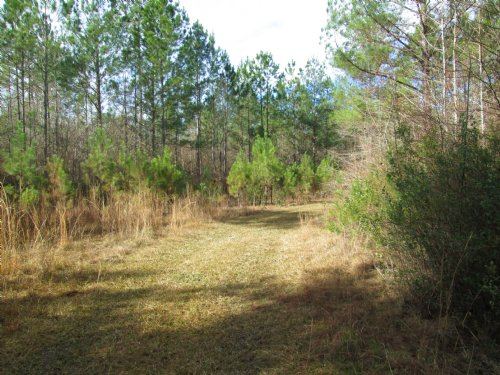 54 Acres Hunting Paradise : Blackshear : Pierce County : Georgia