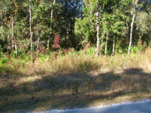 Nice Wooded Lot-769445 : Old Town : Dixie County : Florida
