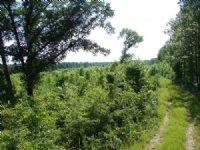Crawford Community 22 Acres : Phenix City : Russell County : Alabama