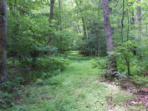 16+/- Acres Land For Sale : Danville : Montour County : Pennsylvania
