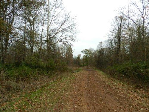 95 Acres Near Evergreen : Evergreen : Avoyelles Parish : Louisiana