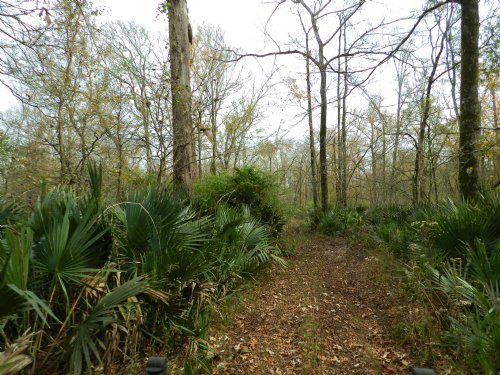 120 Acres Near Morrow & Big Cane : Morrow : St. Landry Parish : Louisiana