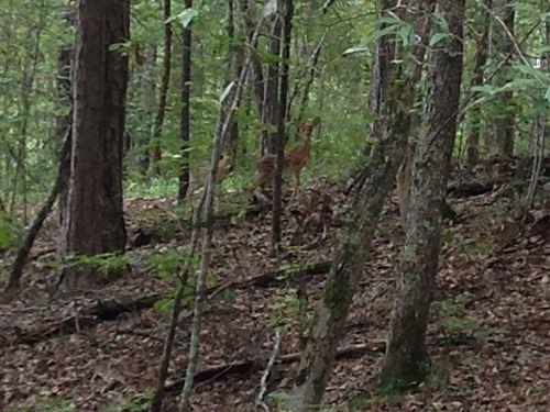 59-010 Shoal Creek Mtn : Ashville : St. Clair County : Alabama