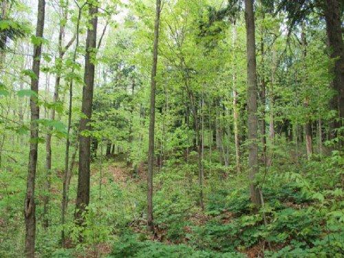 Land Owner Financing Adirondacks : Newport : Herkimer County : New York