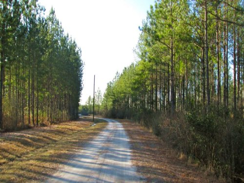 27 Acres, Great Homesite : Manor : Ware County : Georgia