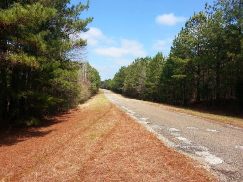53+/- Acres Of Timberland : Fredonia : Chambers County : Alabama