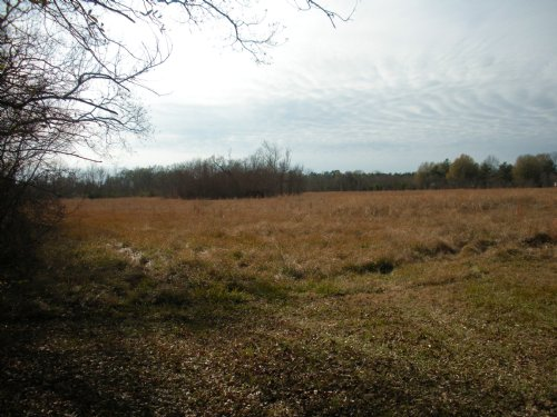 10 Acres Near Buckeye Deville Area : Deville : Rapides Parish : Louisiana