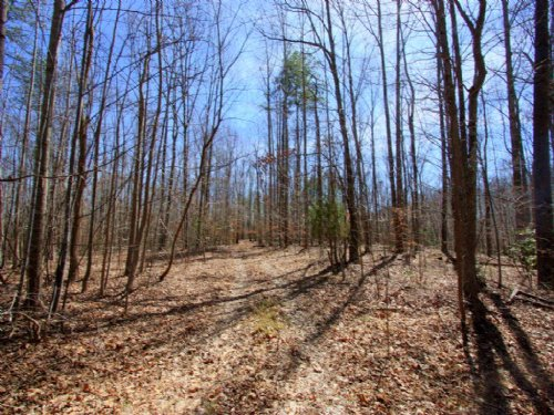 21.9 Acre Wooded Parcel : Port Royal : Caroline County : Virginia