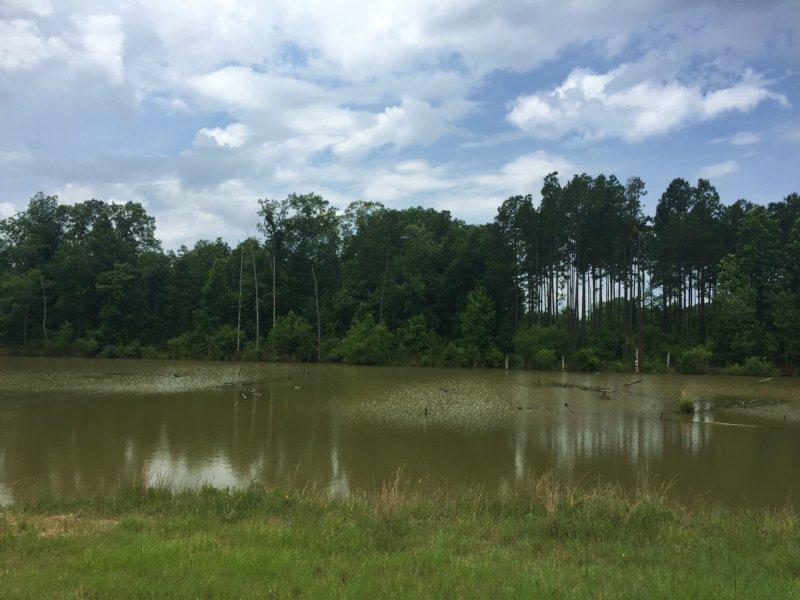 Wild Turkey Tract : Bluffton : Clay County : Georgia