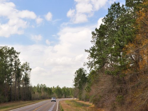 23 Ac Fm 943 Road Frontage : Kountze : Hardin County : Texas