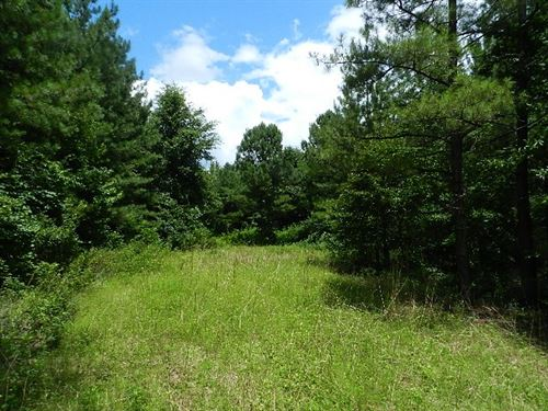 Homesite & Hunting Near Macon : Irwinton : Wilkinson County : Georgia