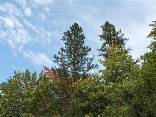 Lot 103b Tobias Rd, Mls# 1085703 : Covington : Baraga County : Michigan