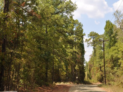 3.9 Ac Cr 2150 Home Site : Woodville : Tyler County : Texas