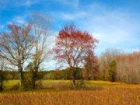 Youngblood Tract : Erwin : Harnett County : North Carolina