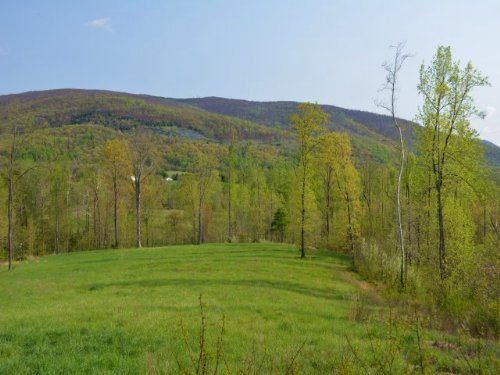 55 Acres On Critzers Shop Road : Afton : Albemarle County : Virginia