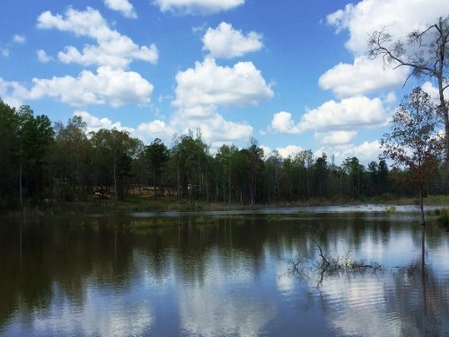 70 +/- Acres With A Pond : Jack : Pike County : Alabama
