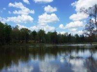70 +/- Acres With A Pond : Jack : Pike County : Alabama