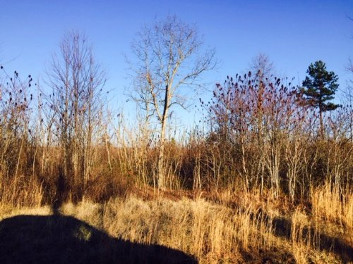 8.70+/- Acres  Bring Your Rv : South Pittsburg : Marion County : Tennessee