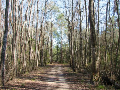 Lost Swamp : Richmond Hill : Bryan County : Georgia