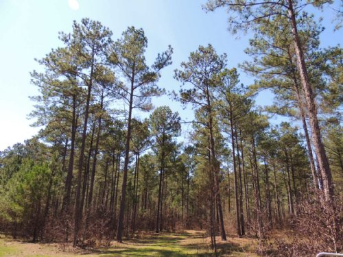 254.32 Ac On Piney Woods Road : Greenville : Meriwether County : Georgia