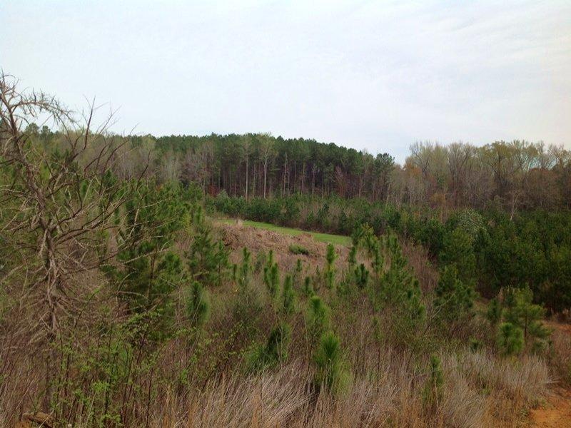 60 Acres Valley Grande : Valley Grande : Dallas County : Alabama