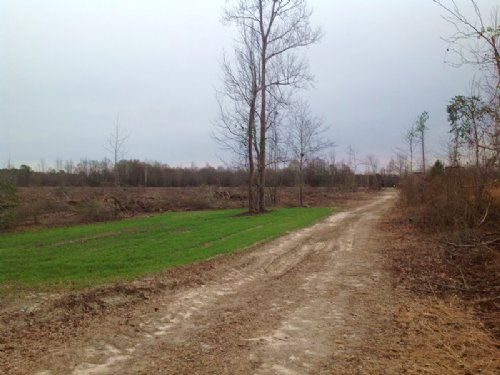 62 Acres In Orrville : Orrville : Dallas County : Alabama