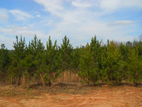 36.37 Ac On Lipham Road : Franklin : Heard County : Georgia
