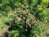 62 Acres, 32 Acres Of Blueberries : Bangor : Van Buren County : Michigan