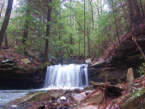 96+/- Acres With Year Round Creek : Gruetli Laager : Grundy County : Tennessee