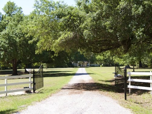 Oakridge Plantation : Green Pond : Colleton County : South Carolina