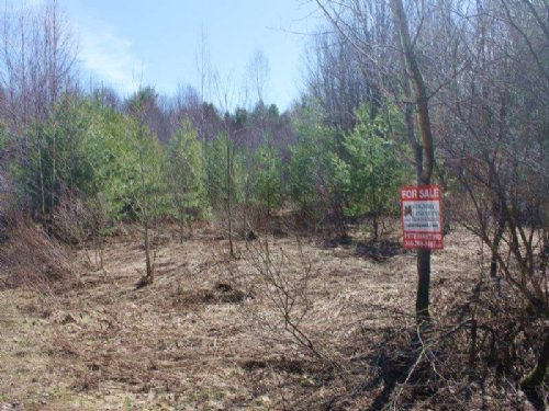Land Near Salmon River 10 Acres : Albion : Oswego County : New York
