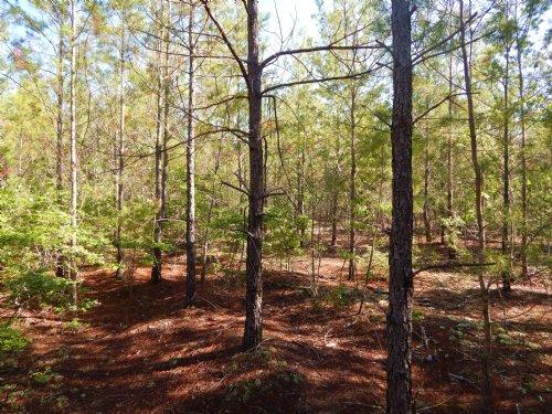 Mauk Plantation Tract : Rupert : Taylor County : Georgia