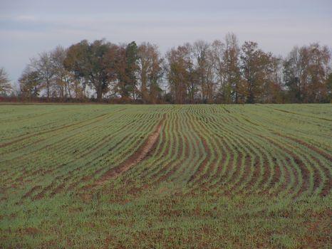 57 Acres : Midville : Burke County : Georgia