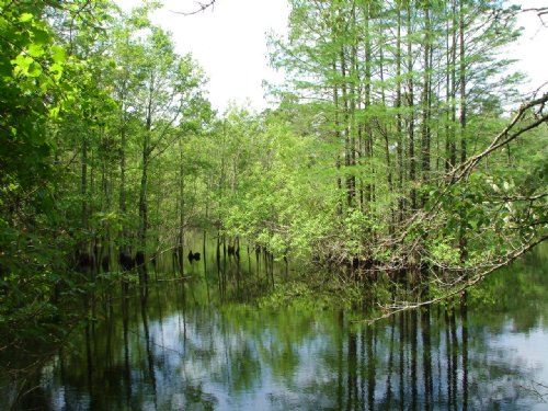 71 Acres With Pond : Brookfield : Tift County : Georgia