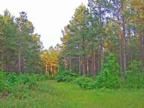 Diverse Hunting Tract : Edison : Calhoun County : Georgia