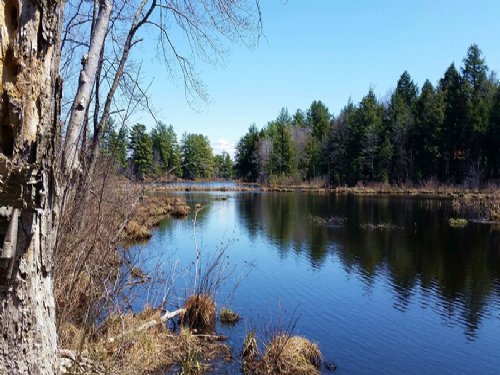 Waterfront Land On River 46 Acres : Amboy : Oswego County : New York