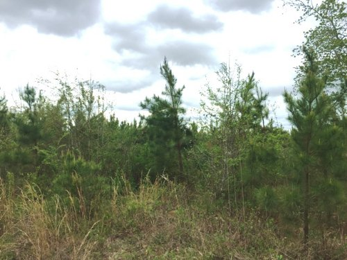 76.09 Acres Of Timberland : Mantee : Clay County : Mississippi