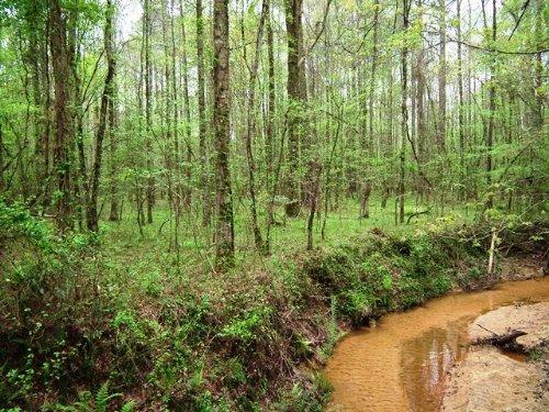 Mooney Road : Carthage : Leake County : Mississippi