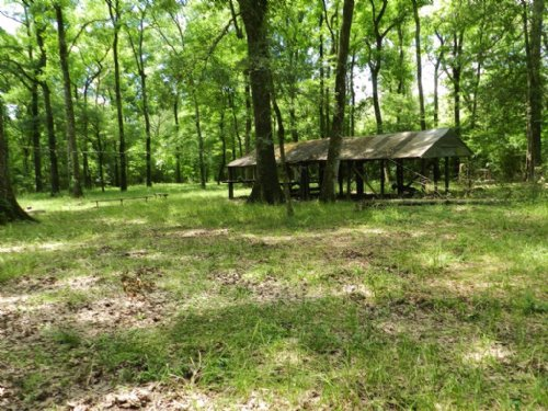Great Timber&hunting Property : Iota : Acadia Parish : Louisiana