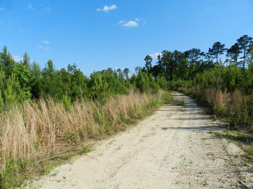 Hunting& Timber Investment Property : Elton : Jefferson Davis Parish : Louisiana