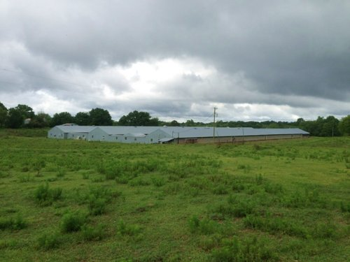 4 +/- Acres With 3 Poultry Houses : Brundidge : Pike County : Alabama