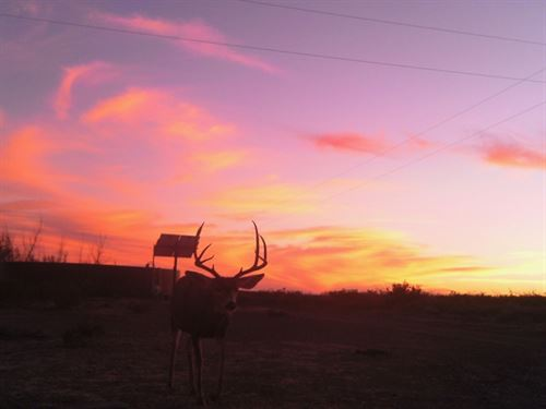 708 Acre Hunting Ranch : Alpine : Brewster County : Texas