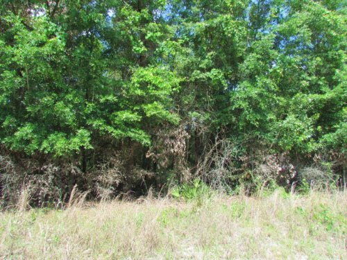 9.88 Acre Wooded Tract - 769990 : Branford : Gilchrist County : Florida