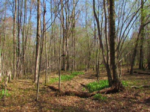 Land Marketable Timber 75 Acres : Cincinnatus : Cortland County : New York