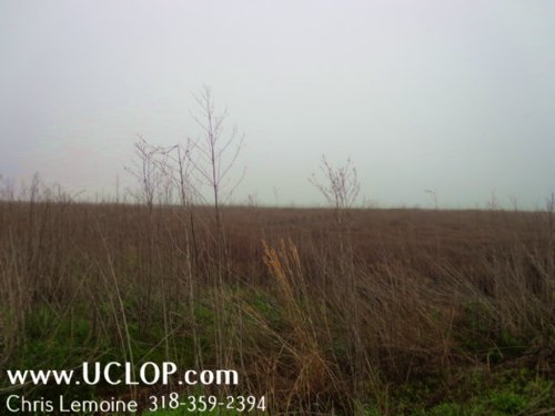 Duck & Trophy Deer Hunting Property : Bentley : Grant Parish : Louisiana