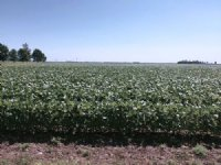 34 Acres Of Quality Cropland : Elkton : Brookings County : South Dakota