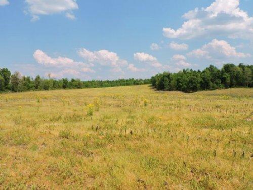 50+/- Acres : Hodgenville : Larue County : Kentucky