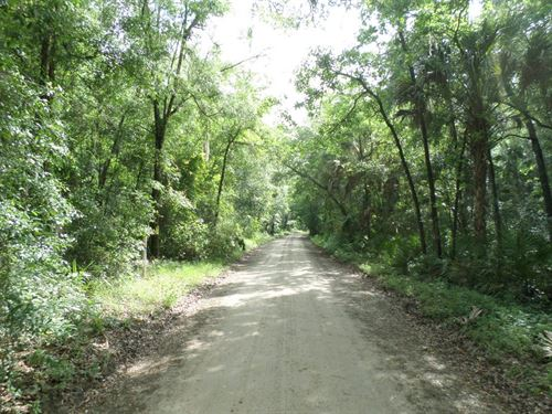 40 Acres - Goethe Rd : Inglis : Levy County : Florida