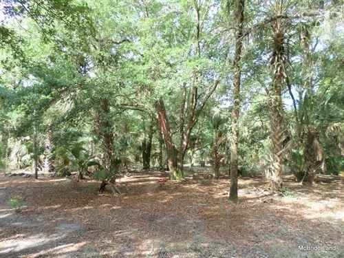 40 Acres - Sr 19 : Inglis : Levy County : Florida